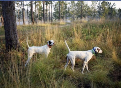 Southwind plantation hunting dogs vacation